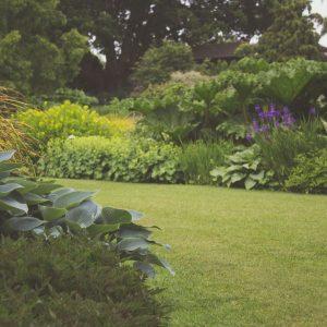 home renovation - landscaping professional - garden maintenance