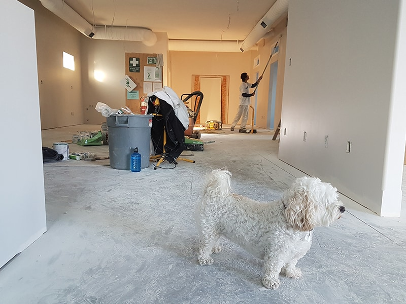 kandua real projects dog next to wall painter painting diy project