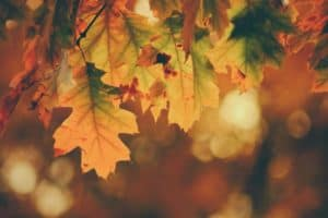 4 Awesome Autumn Fixes For Your Home - utumn Leaves against bokeh background